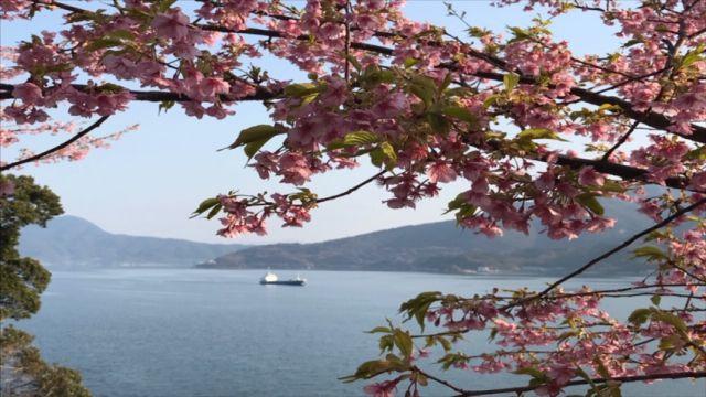 春の海と桜