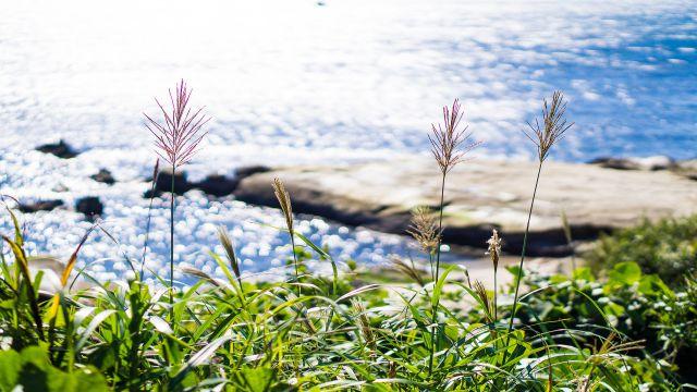 美しい日本の海