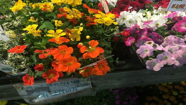花屋さんに陳列された花を買って、家のテーブルの上に飾ると気分が晴れる