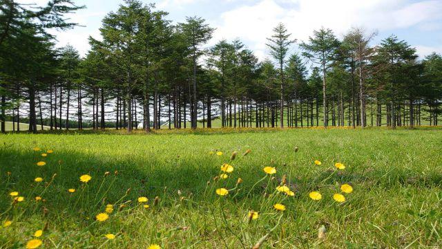 北海道の美しい景色